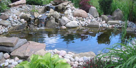 AquA AnimaniA Ponds image.