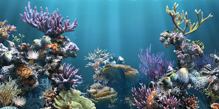 AquA AnimaniA fish and aquariums image.