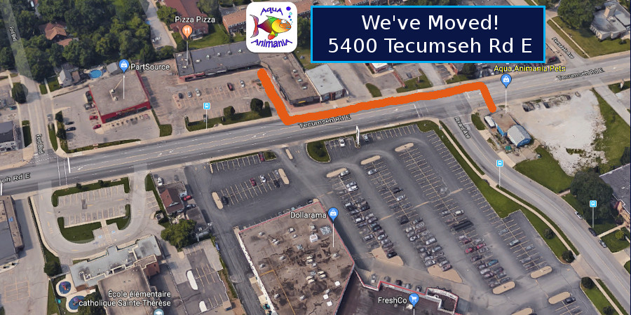 AquA AnimaniA has Moved 100 metres west to 5400 Tecumseh Rd East!